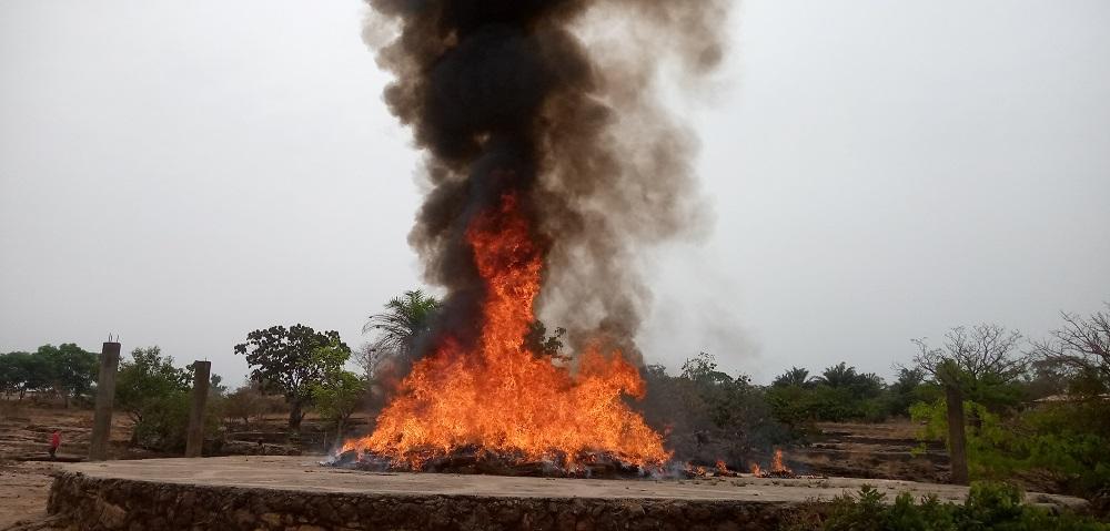 Télimélé   Des centaines de kilogrammes de chanvre indien incinérés ( guineenews.org)