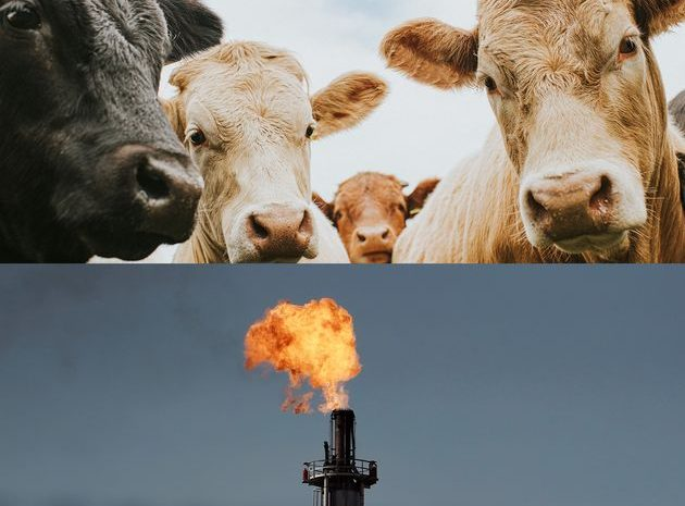 Le méthane est pire que le CO2, il serait pourtant simple de limiter les dégâts