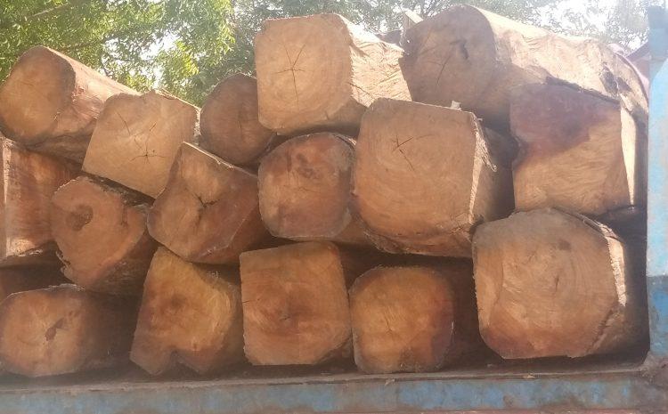 (Guineenews.org)Coupe de bois illicite à Faranah : 5 cadres suspendus et 6 présumés coupables assignés en justice