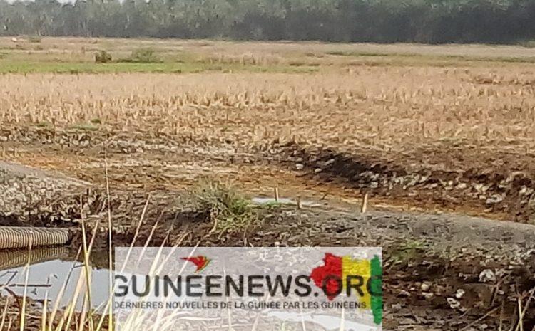 (Guineenews.org)Forécariah : Les autorités reçoivent la première quantité d'engrais pour la campagne agricole 2021