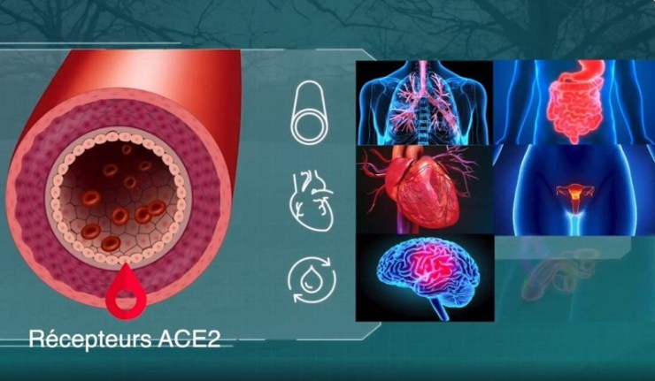 (Reseauinternational)Que se passe-t-il dans un corps humain qui reçoit une injection ARNm ou ADN contre le Covid-19 ?
