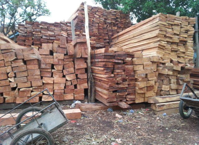 (Guineenews.org)Affaire coupe illicite de bois, le procès ouvert à Mamou