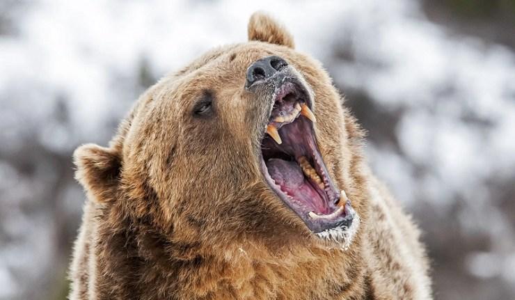 (Reseauinternational)Ne pas chatouiller l'ours, conseil aux Ukrainiens