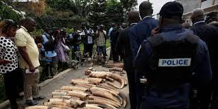 (monde.fr)Les éléphants, emblèmes de la Côte d'Ivoire, en voie d'extinction.