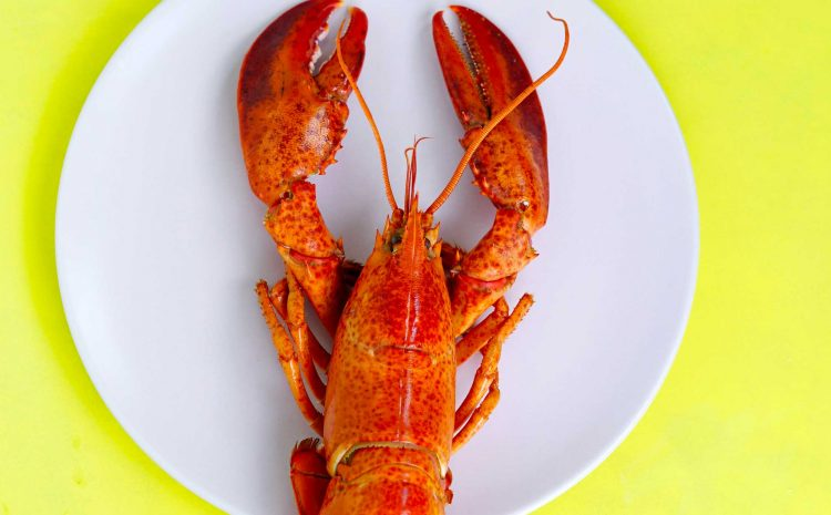 (lapresse.ca)Les Américains s'arrachent le homard du Québec