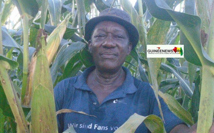 (Guineenews.org)Kissidougou : le président de la chambre d'agriculture vante les vertus de la terre