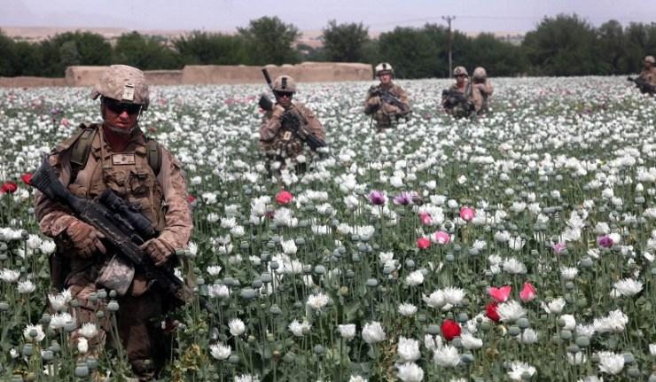 (Reseauinternational)Les Taliban interdisent officiellement la production, la distribution et la consommation de stupéfiants