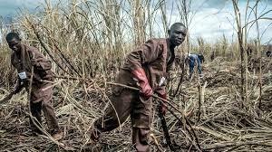 (rfi.fr)Centrafrique: une ONG dénonce un «accord tacite» entre le groupe Castel et des groupes armés.